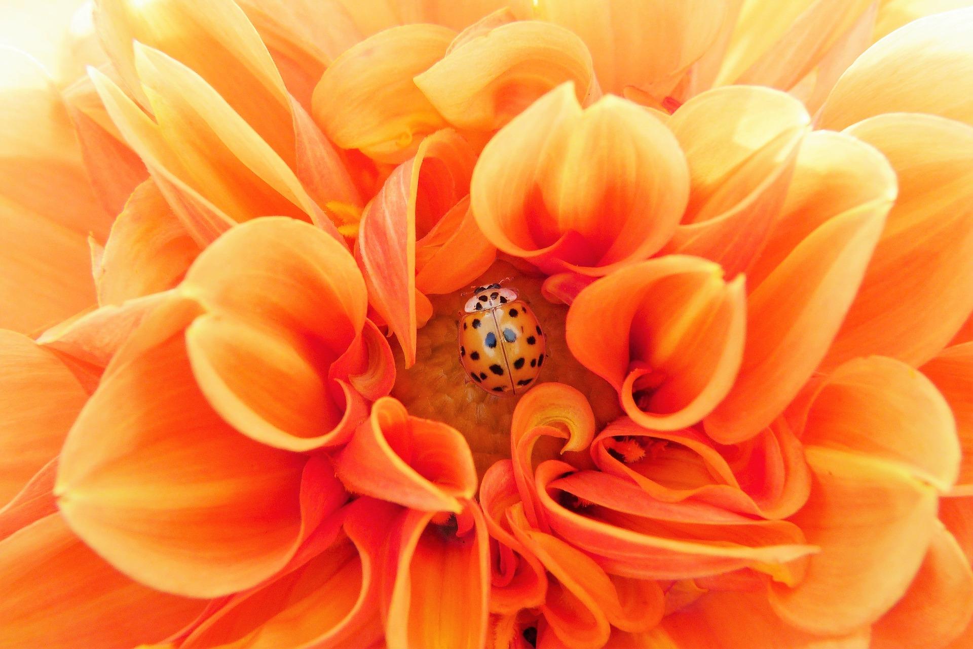 http://www.althea-fleurs.com/wp-content/uploads/2019/10/dahlia-2798610_1920-1.jpg
