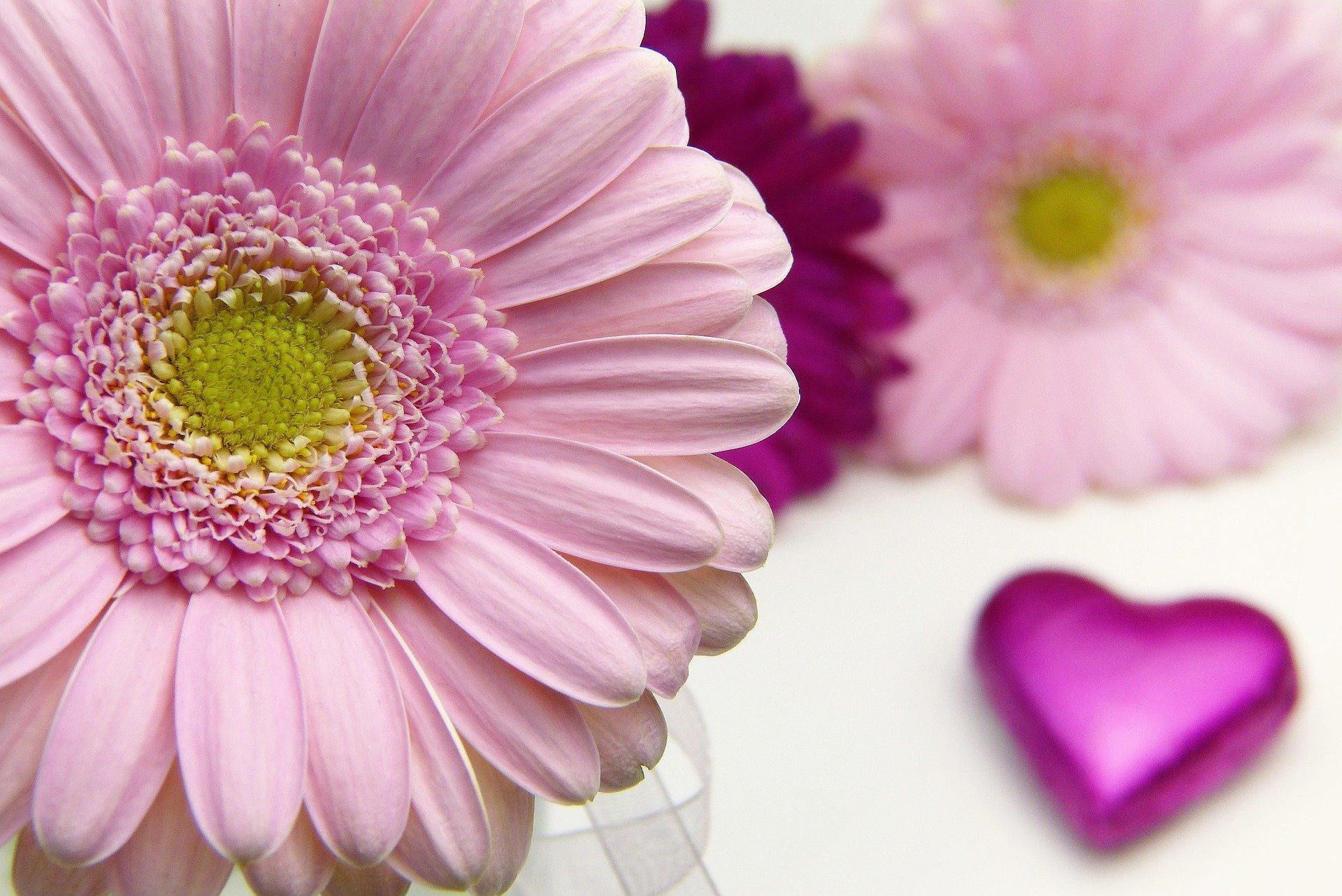 http://www.althea-fleurs.com/wp-content/uploads/2020/01/flower-3086546_1920-1.jpg